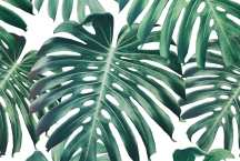 CaraSaven-GreenDeliciousMonsterLeaves-Wallpaper