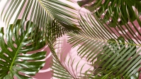 west-elm-tropical-leaves-desktop-wallpaper